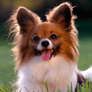Как правильно стричь собаку?